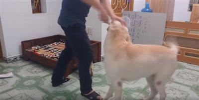 Đáng yêu như chú cún này: giằng co, ngăn chủ đánh bạn cùng nhà 3