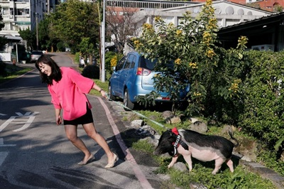 Anita Chen và chú lợn cưng