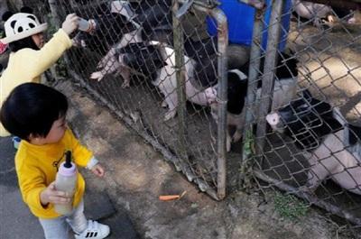Trẻ em cho lợn uống sữa