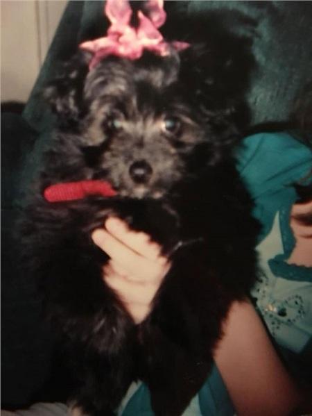 Cô gái nhận nuôi chú cún vì giống boss thời thơ ấu và cái kết khiến nhiều người xúc động 0