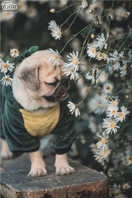 Tháng 10 đến rồi, 'tút tát sương sương' để đi check-in với những loài hoa tuyệt sắc ngay nào! 22