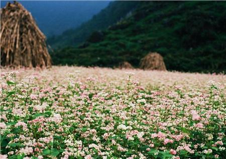 Tháng 10 đến rồi, 'tút tát sương sương' để đi check-in với những loài hoa tuyệt sắc ngay nào! 4