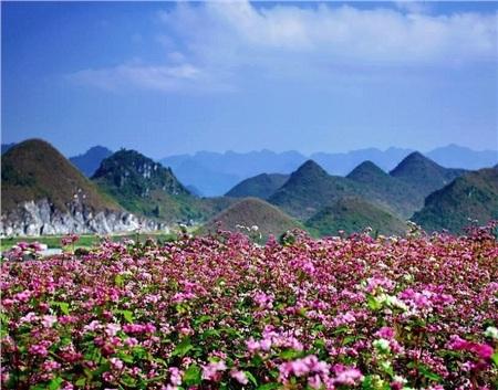 Tháng 10 đến rồi, 'tút tát sương sương' để đi check-in với những loài hoa tuyệt sắc ngay nào! 5