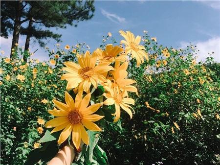 Tháng 10 đến rồi, 'tút tát sương sương' để đi check-in với những loài hoa tuyệt sắc ngay nào! 7