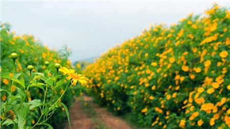 Tháng 10 đến rồi, 'tút tát sương sương' để đi check-in với những loài hoa tuyệt sắc ngay nào! 8