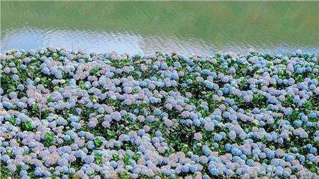Tháng 10 đến rồi, 'tút tát sương sương' để đi check-in với những loài hoa tuyệt sắc ngay nào! 12