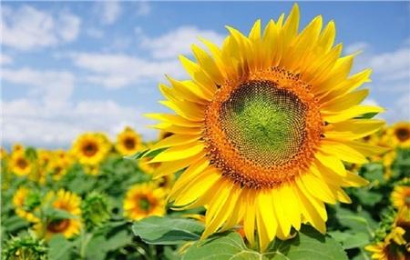 Tháng 10 đến rồi, 'tút tát sương sương' để đi check-in với những loài hoa tuyệt sắc ngay nào! 13