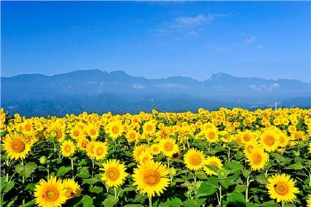 Tháng 10 đến rồi, 'tút tát sương sương' để đi check-in với những loài hoa tuyệt sắc ngay nào! 15
