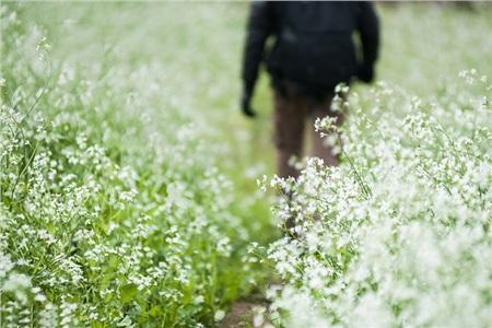 Tháng 10 đến rồi, 'tút tát sương sương' để đi check-in với những loài hoa tuyệt sắc ngay nào! 16