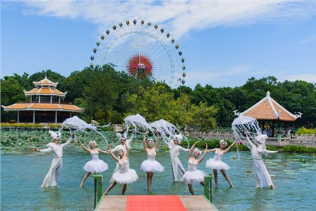 Bạn sẽ bị mê hoặc với màn trình diễn 'thiên nga thần vũ' trên mặt hồ Đầm Sen (10h00 & 16h00)