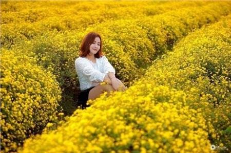 Mùa hoa cúc nở rộ ở Ninh Bình