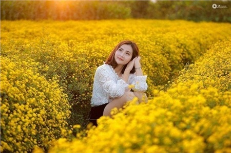 Cánh đồng hoa cúc đang gây sốt nằm ở thông Hoàng Sơn, xã Ninh Tiến, TP. Ninh Bình.