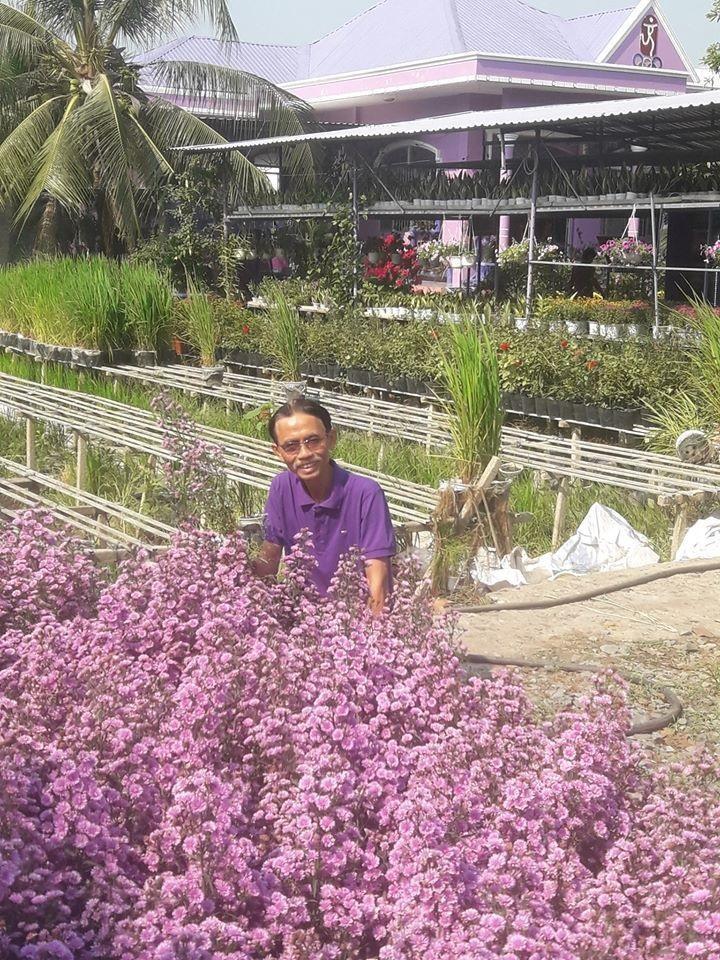 Những loài hoa ông T. dùng để kinh doanh cũng nhuộm một màu tím biếc. Đây cũng là nguồn thu nhập chính của gia đình ông tại đất hoa Sa Đéc.