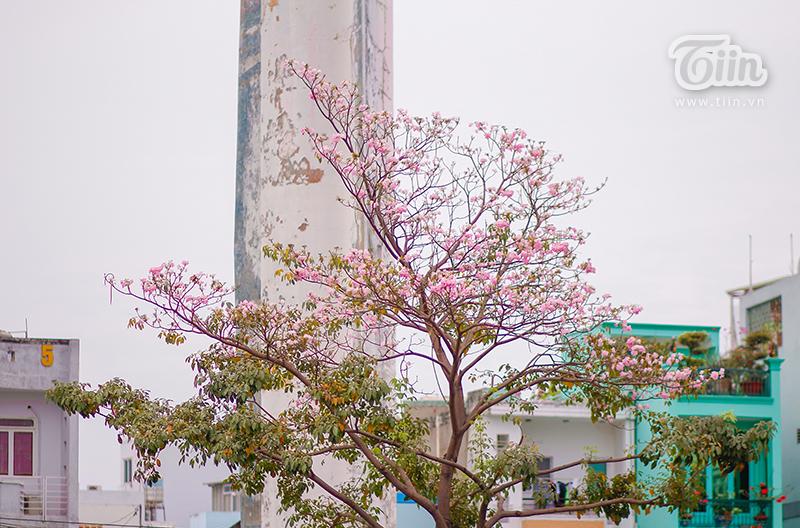 Màu hoa làm dịu đi cái nắng gay gắt ngày hè ở TP.HCM.