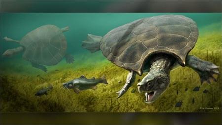 Loài rùa khổng lồ này sống ở vùng nước ngọt