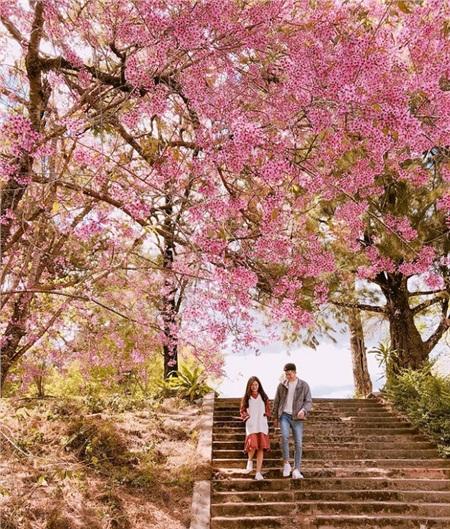 Khuôn viên Đại học Đà Lạt đẹp như trong màn ảnh phim Hàn Quốc.