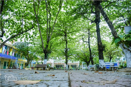 Không gian tĩnh lặng của trường học những ngày cuối xuân nhưng khiến người ta liên tưởng đến những ngày hè, thời điểm học sinh được nghỉ học để tái tạo năng lượng cho năm học mới.