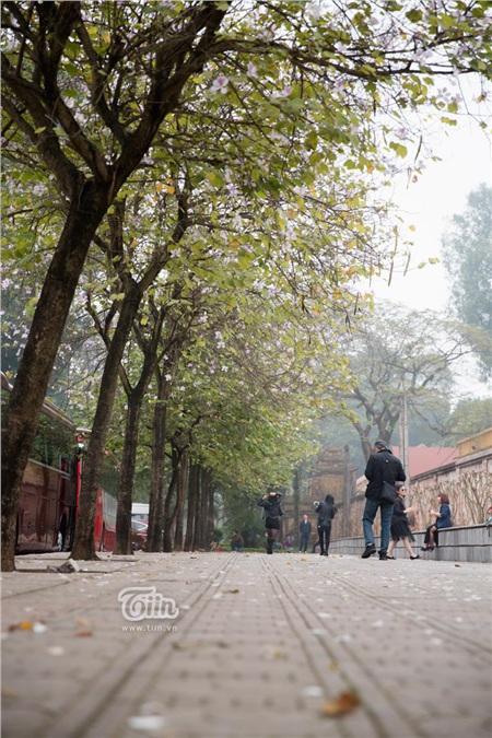 Từ lâu, loài hoa này đã được trồng rất nhiều trên các tuyến phố hay công viên tại Hà Nội. Những tuyến phố có hoa ban nở đẹp nhất phải kể đến là đường Hoàng Diệu, đường Bắc Sơn, đường Thanh Niên... Đây cũng trở thành địa điểm được nhiều người lựa chọn làm địa điểm chụp ảnh.