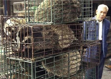 Hoạt động kinh doanh liên quan tới động vật hoang dã đã trở thành ngành công nghiệp khổng lồ ở Trung Quốc và đã rất khó kiểm soát ở khâu chế biến. Ảnh: AP