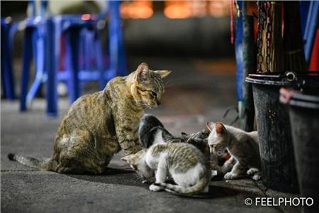 Xúc động khoảnh khắc mèo mẹ nhường đồ ăn cho đàn con nheo nhóc 0