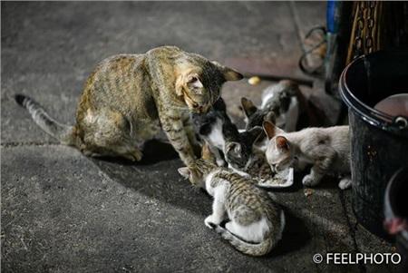 Xúc động khoảnh khắc mèo mẹ nhường đồ ăn cho đàn con nheo nhóc 1