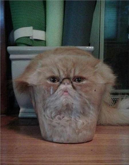 Một cốc... mèo thật đầy cho buổi tối thảnh thơi.