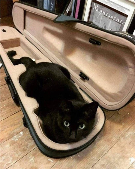 Ồ, hóa ra đây là một 'đàn' mèo đó hả?