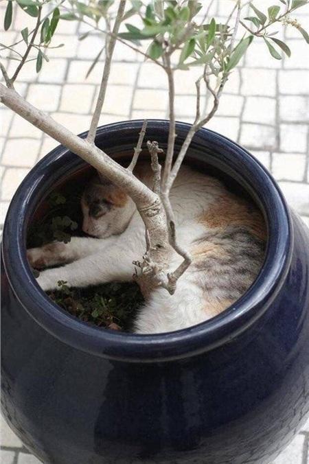 Chợp mắt chút dưới gốc cây nào.