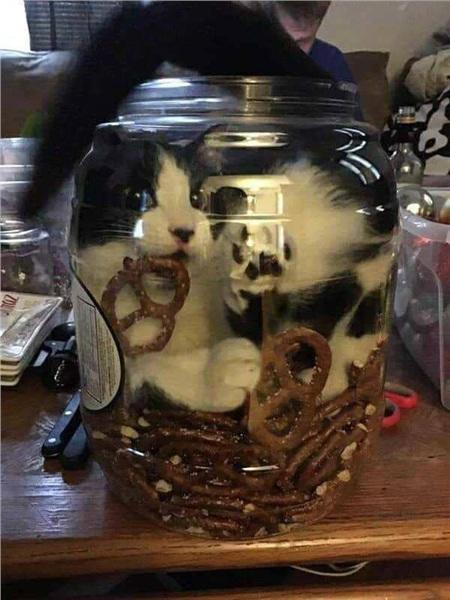 Bánh quy vị mèo có ngon không nhỉ?