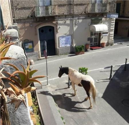 Trong khi cả mọi người ở trong nhà vì Covid-19, các loài động vật 'tung tăng dạo phố' 1