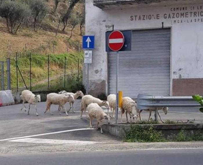 Thế giới động vật trên đường phố Ý.
