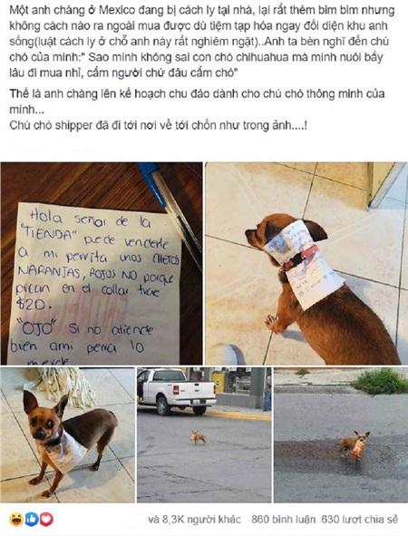 Câu chuyện về chú chó 'shipper' nhận được rất nhiều sự quan tâm từ dân mạng