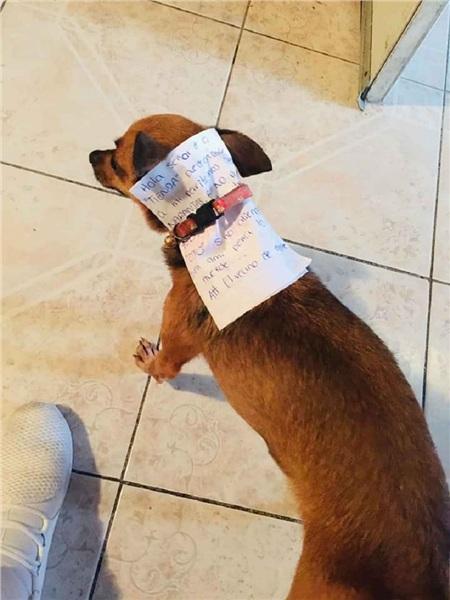 Đầu tiên, anh chàngviết một bức thư nêu rõ yêu cầu của mình với chủ quán. Sau đó kẹp lá thư kèm số tiền mua bim bim vào cổ 'boss'và hướng dẫn chú chóđi sang bên kia đường.