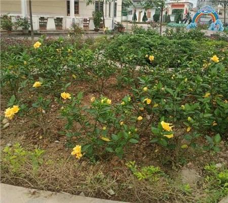 Bên trong khu cách ly ở trường mầm non Hà Tĩnh: Mọi người rủ nhau dọn dẹp, trồng rau, làm vườn 1