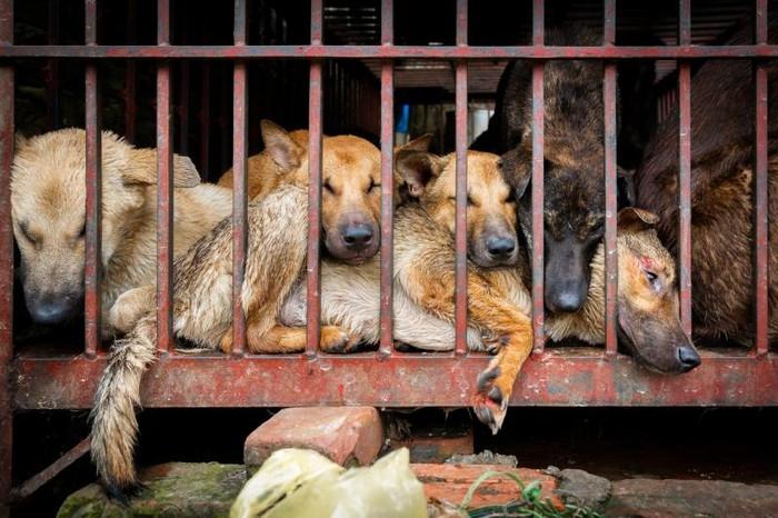 Những địa điểm kinh doanh thịt và động vật sống tràn lan như những quả bom hẹn giờ