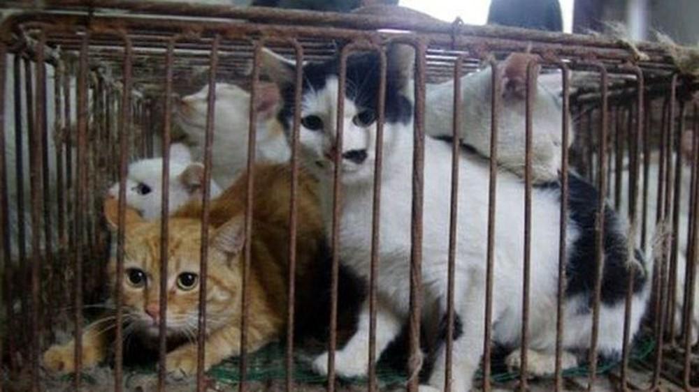 Những loại thịt chó, mèo có liên quan đến sự bùng phát của dịch tả, các trường hợp mắc bệnh trichinella và bệnh dại