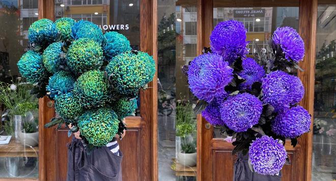 Loài hoa này có nhiều màu sắc khác nhau khá lạ mắt. (Nguồn ảnh: Shmily Flowers)