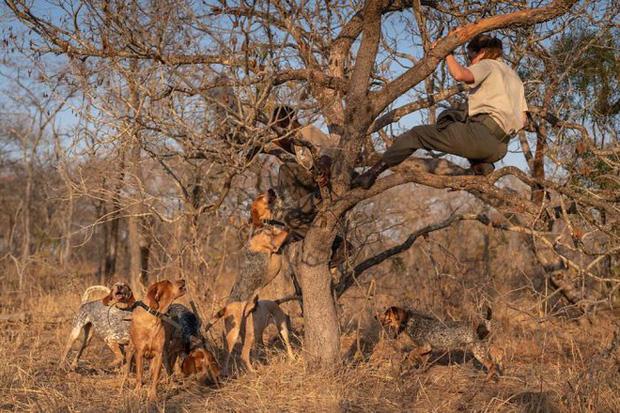 Chó được huấn luyện để bảo vệ động vật hoang dã đã cứu được 45 con tê giác khỏi những kẻ săn trộm 1
