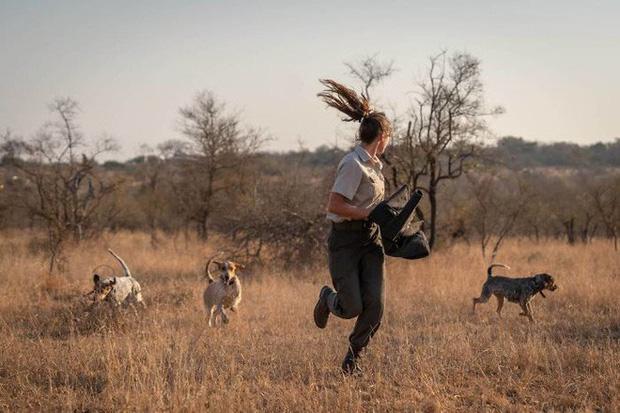 Một nhóm chó đã được huấn luyện để bảo vệ động vật hoang dã ngay từ khi chúng còn là những con chó con.
