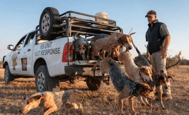 Nam Phi là quốc gia bị ảnh hưởng nặng nề nhất bởi những kẻ săn trộm tê giác, vì vậy không có nơi nào tốt hơn cho một dự án như này phát triển.