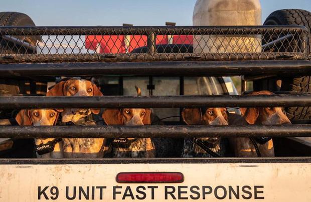 Ở các khu vực nơi trường Cao đẳng Động vật hoang dã Nam Phi tuần tra, tỷ lệ thành công nhiệm vụ của những con chó là khoảng 68% khi sử dụng cả chó theo dõi tự do và chó có dây xích.