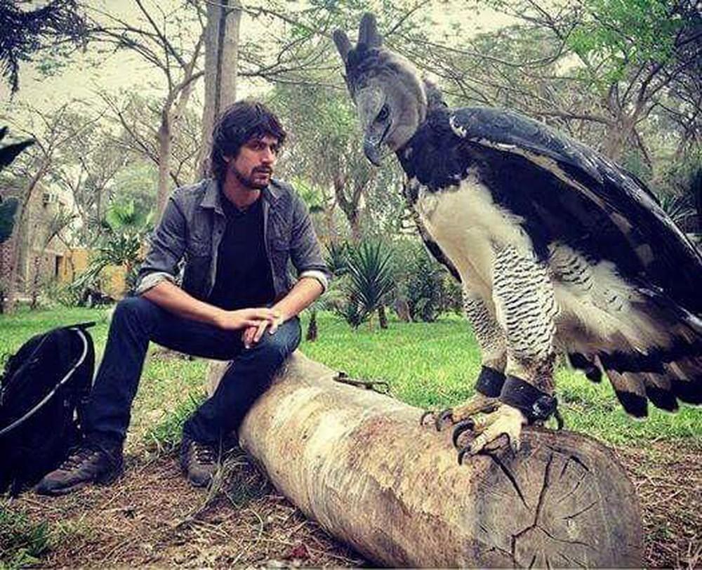 Sửng sốt với loài chim đại bàng lớn nhất hành tinh, có biểu cảm khuôn mặt giống hệt con người 1