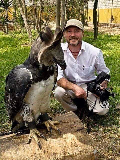 Sửng sốt với loài chim đại bàng lớn nhất hành tinh, có biểu cảm khuôn mặt giống hệt con người 5