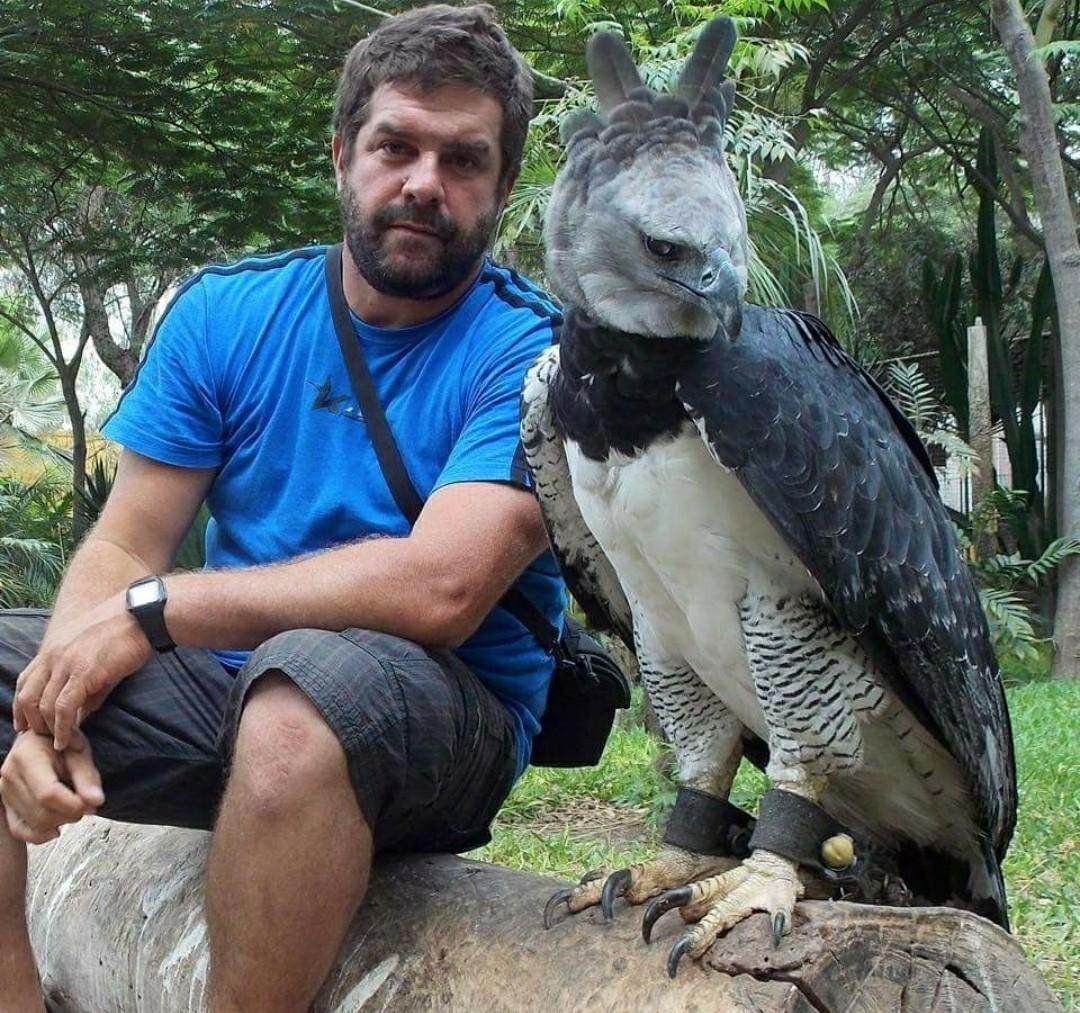 Sửng sốt với loài chim đại bàng lớn nhất hành tinh, có biểu cảm khuôn mặt giống hệt con người 6