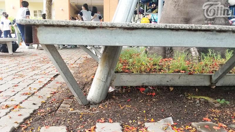 Cận cảnh trụ đỡ gốc cây phượng tại trường THCS Lê Văn Tám.