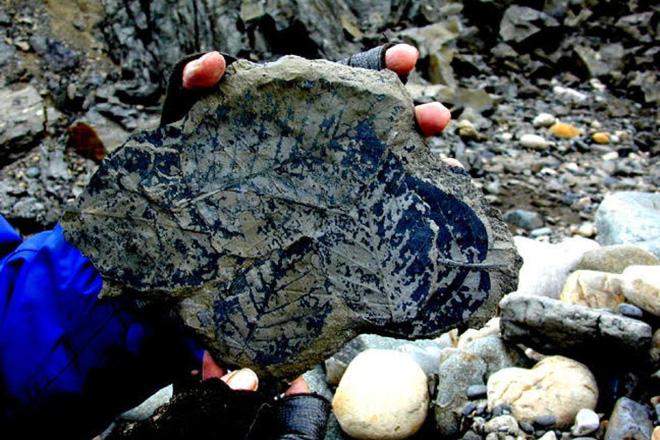 Hóa thạch thực vật có thể tiết lộ mức độ CO2 trong khí quyển tại thời điểm chúng sống.
