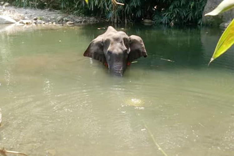 Những hình ảnh của voi mẹ trước khi qua đời cùng sinh linh trong bụng.