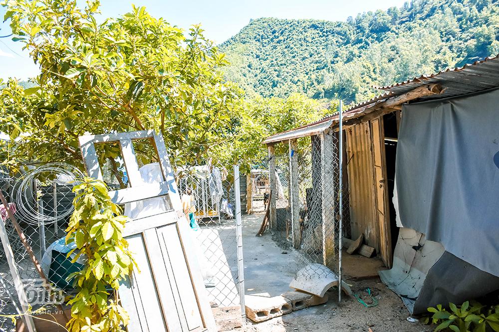 Chùm ảnh: Cuộc sống của những chú chó bị bỏ rơi nơi 'mái ấm' cách xa khu dân cư ở Đà Nẵng 0
