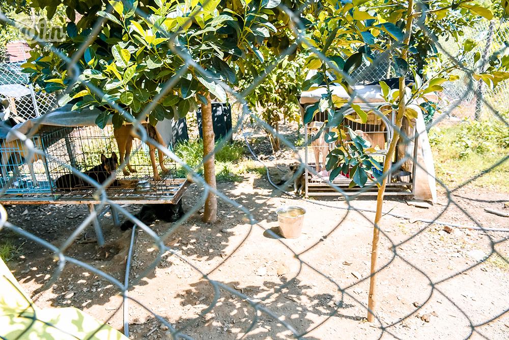 Chùm ảnh: Cuộc sống của những chú chó bị bỏ rơi nơi 'mái ấm' cách xa khu dân cư ở Đà Nẵng 1