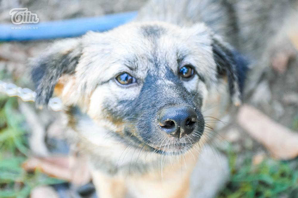 Chùm ảnh: Cuộc sống của những chú chó bị bỏ rơi nơi 'mái ấm' cách xa khu dân cư ở Đà Nẵng 3